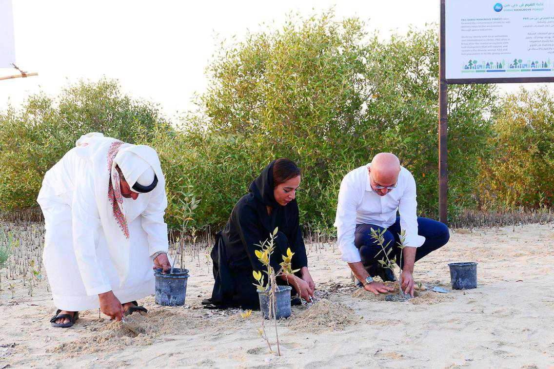 Everything you need to learn about the new Dubai Mangrove Forest